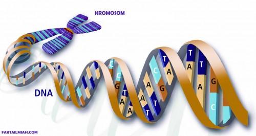 E-KTP Mungkin Juga Perlu Dilengkapi Data DNA